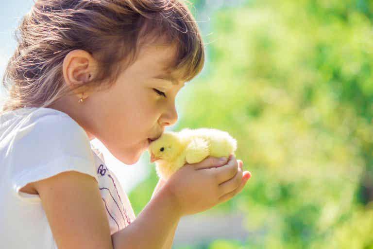 El fenómeno literario infantil: el pollo Pepe