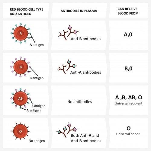 Tabla con los tipos de grupos sanguíneos para explicárselo a los niños