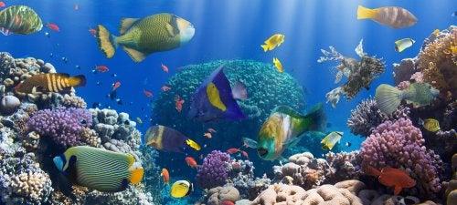 Animales marinos, protagonistas de esta selección de libros infantiles.