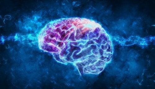 Alimentación para fomentar el rendimiento cognitivo