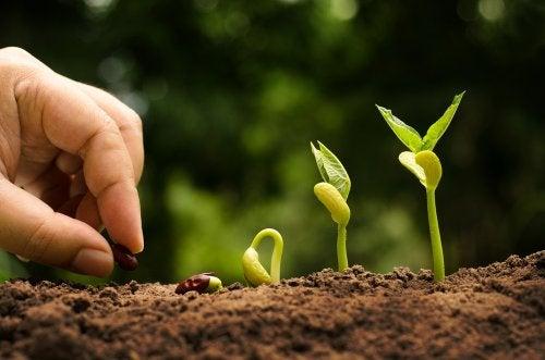 Explicar a los niños el Ciclo de la Vida plantando la semilla de un árbol.