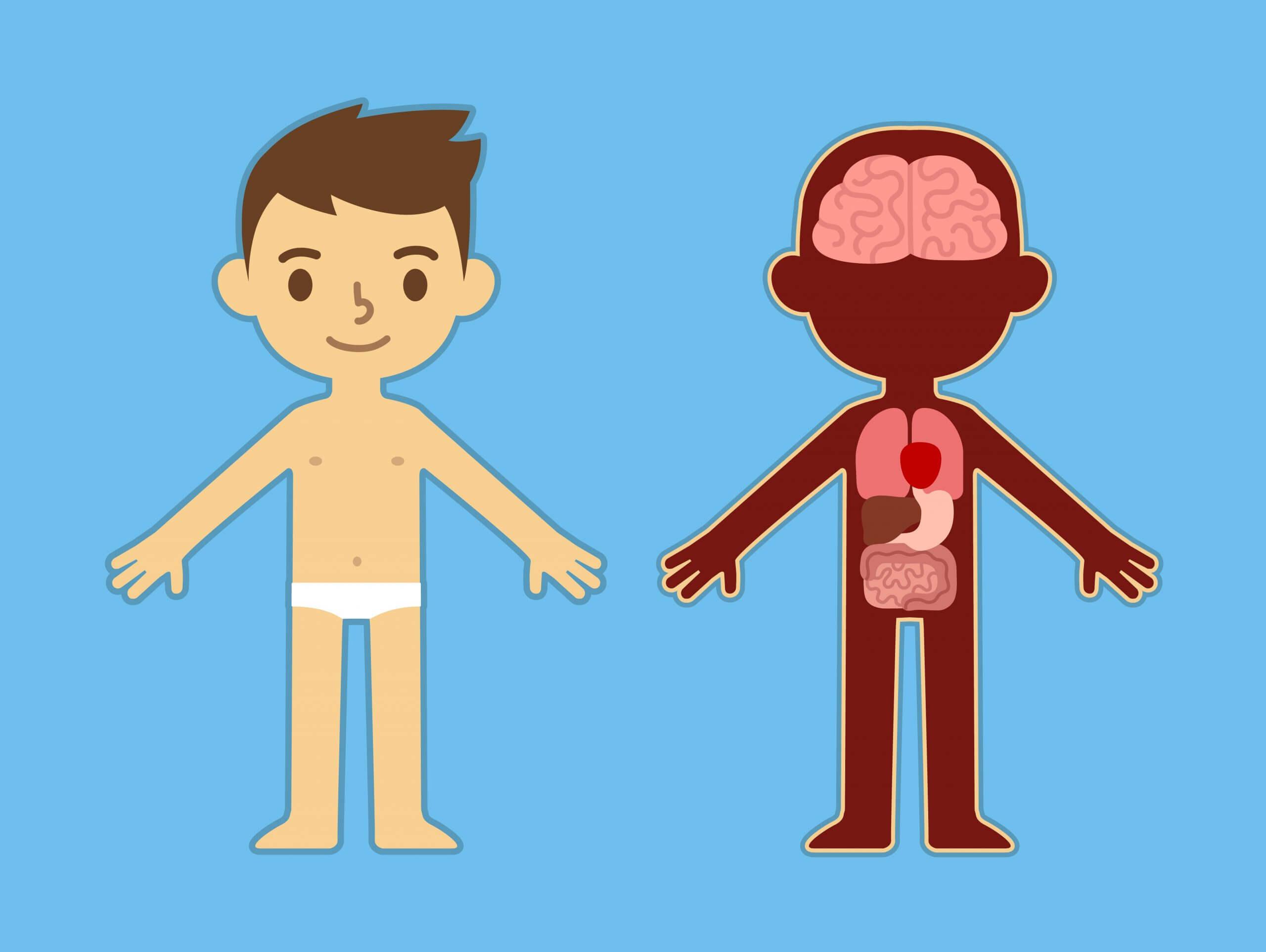 Conoce el cuerpo humano en profundidad