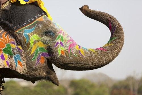 Elmer, el elefante más querido de la literatura infantil