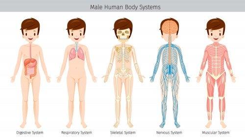 Diferentes sistemas y partes del cuerpo humano.