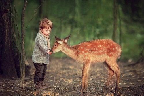 Niño dando de comer a un cervatillo en el bosque.