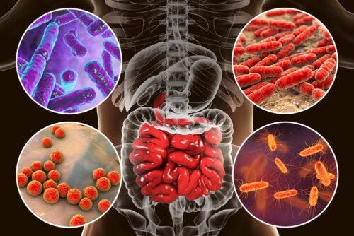 El microbioma intestinal de mi bebé: ¿por qué importa?