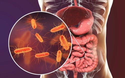 Microbioma intestinal.