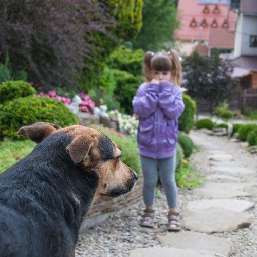 Niña con miedo a los perros enfrentándose poco a poco a uno gracias a la desensibilización sistemática.