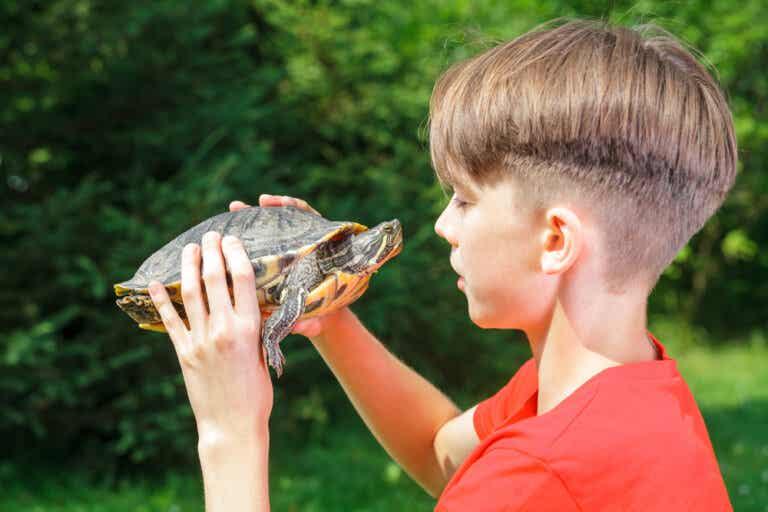 Los efectos de la técnica de la tortuga en la autoestima