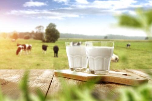 ¿Es antinatural tomar leche de otra especie?