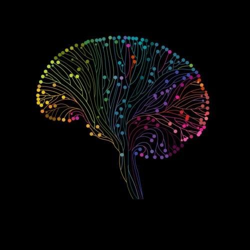 Neuroplasticidad y aprendizaje: una bonita relación