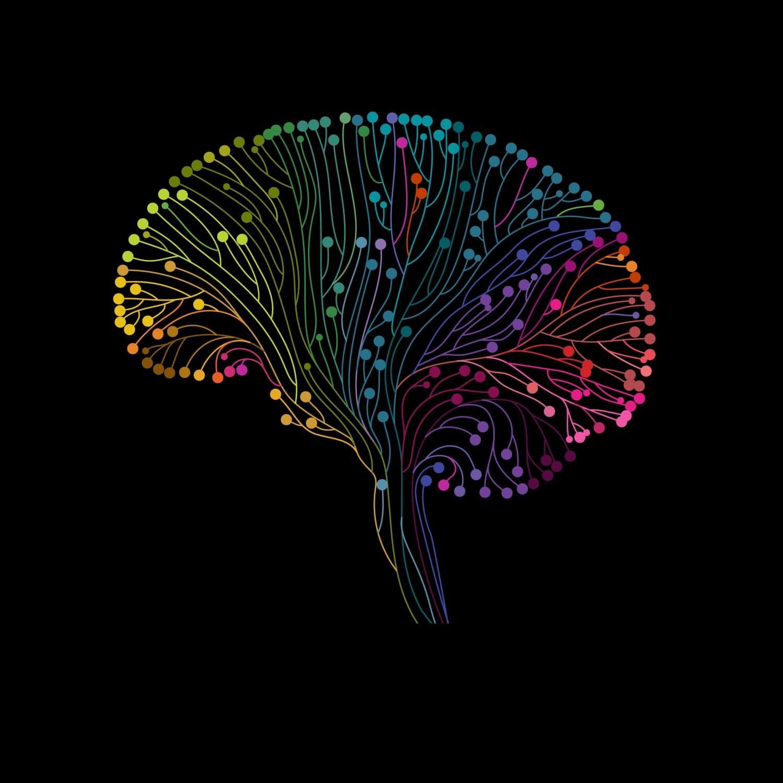 Schéma du cerveau avec des couleurs.