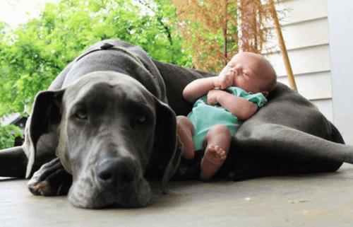 Bebé durmiendo acurrucado sobre su perro.