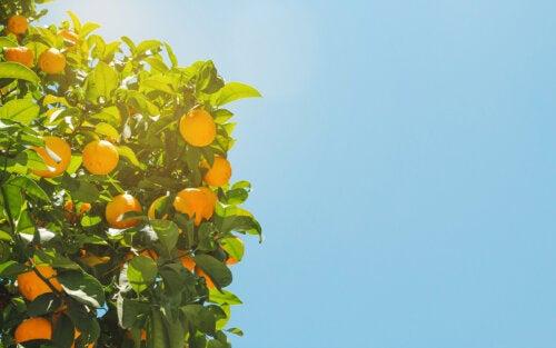 Cómo explicar la teoría del apego con naranjas