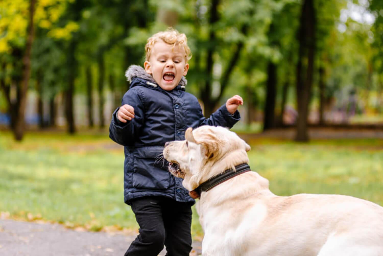 Niño con miedo a los perros gritando y asustado.