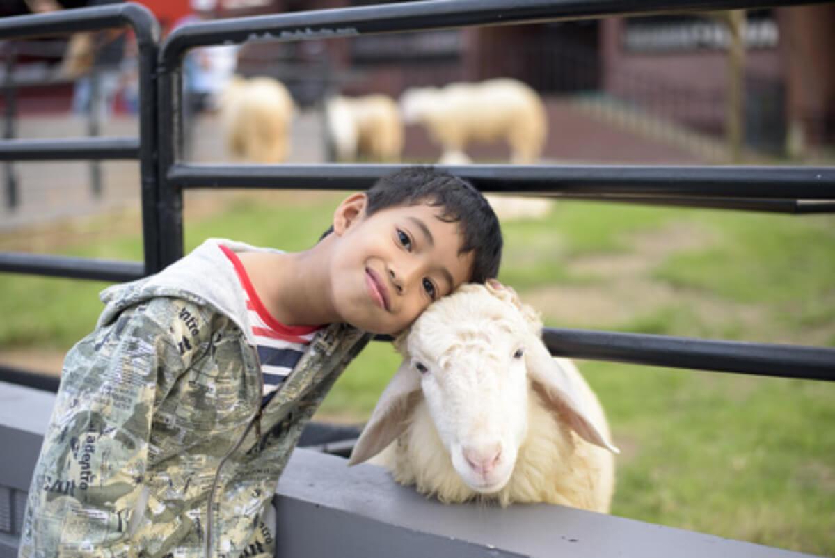 Ver animale es una de las cosas que hacen feliz a tu hijo, como este niño, que abraza a una oveja.