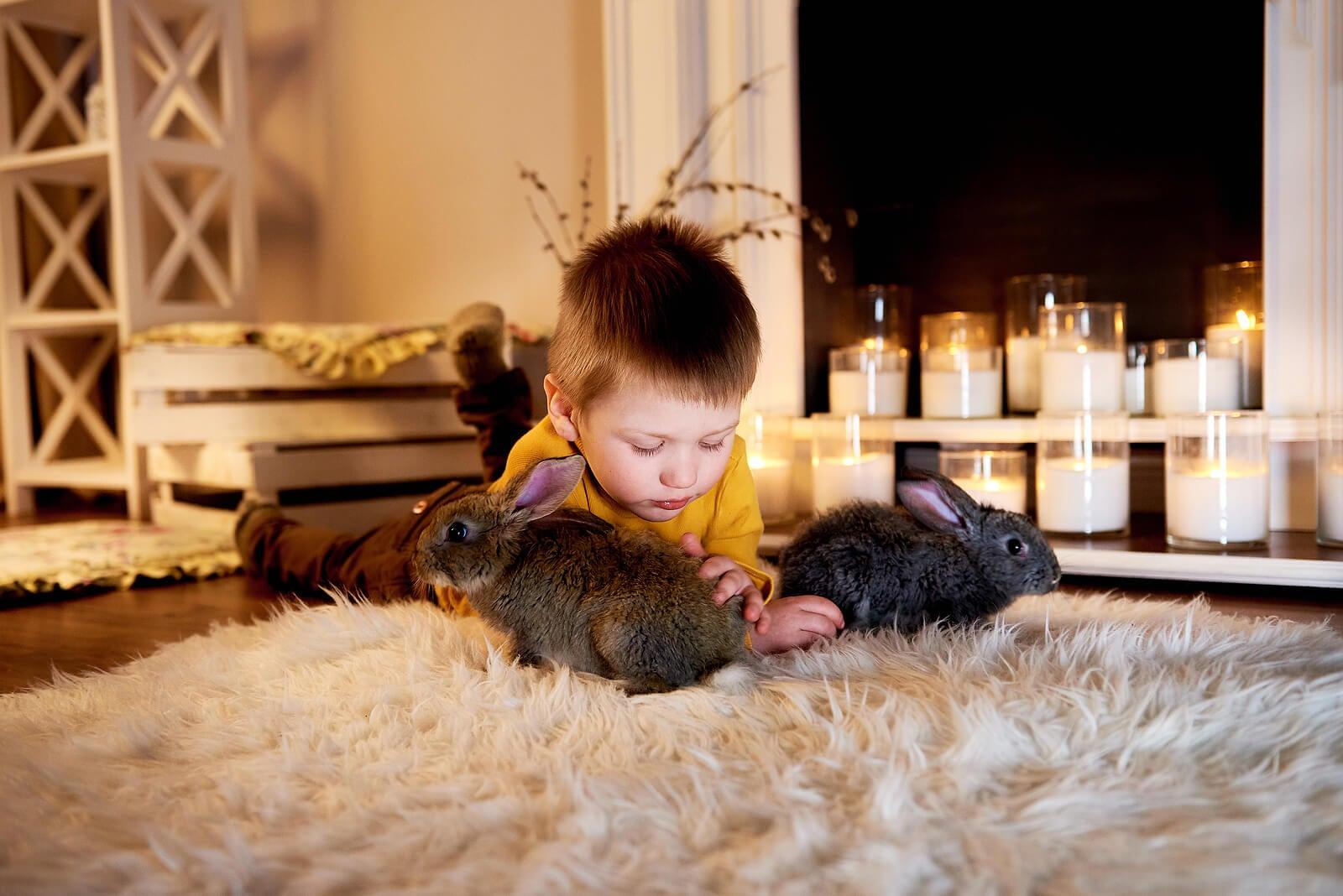 Niño jugando con sus mascotas los conejos.