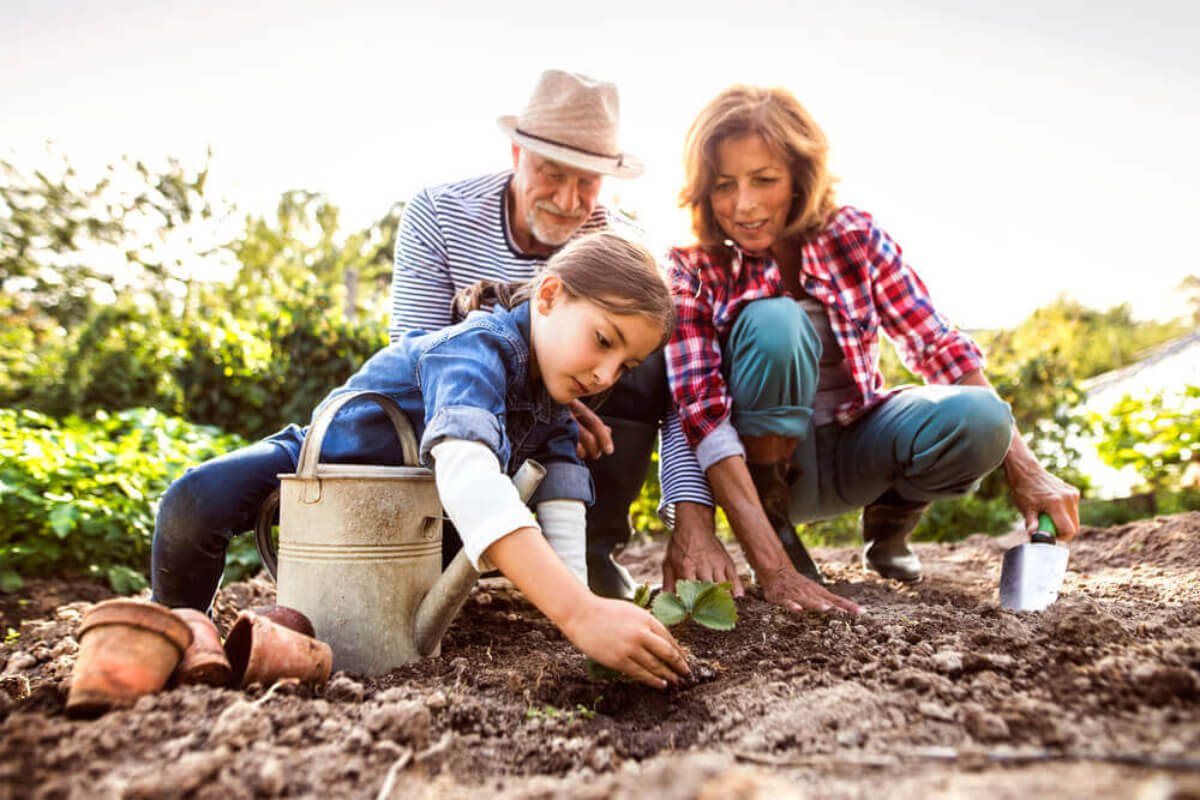 Abuelos con su nieta plantando hortalizas en el huerto familiar.