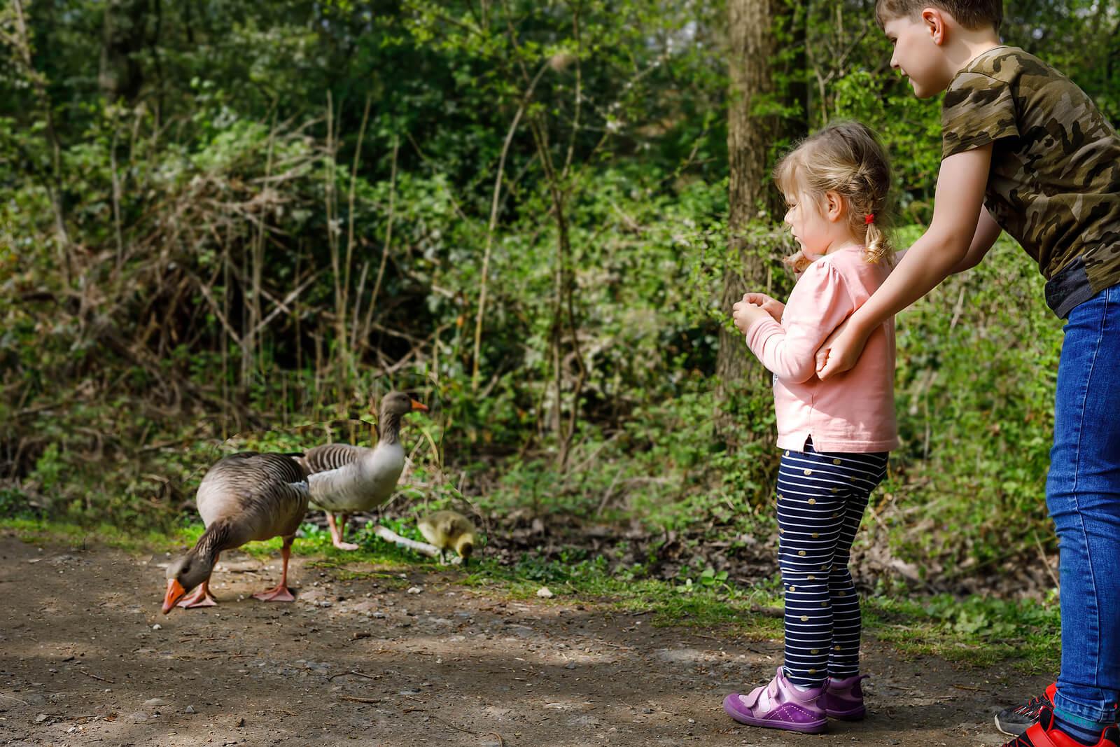 Niña dando de comer a unos pájaros para perder el miedo.