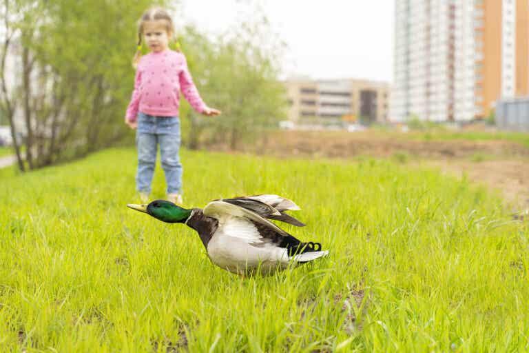 Mi hijo tiene miedo a los pájaros, ¿qué hago?