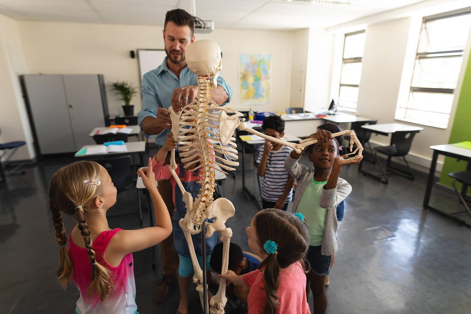 Profesor explicando el cuerpo humano con un esqueleto.