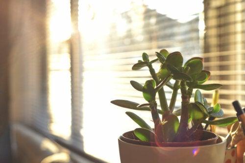 7 plantas para niños fáciles de cuidar