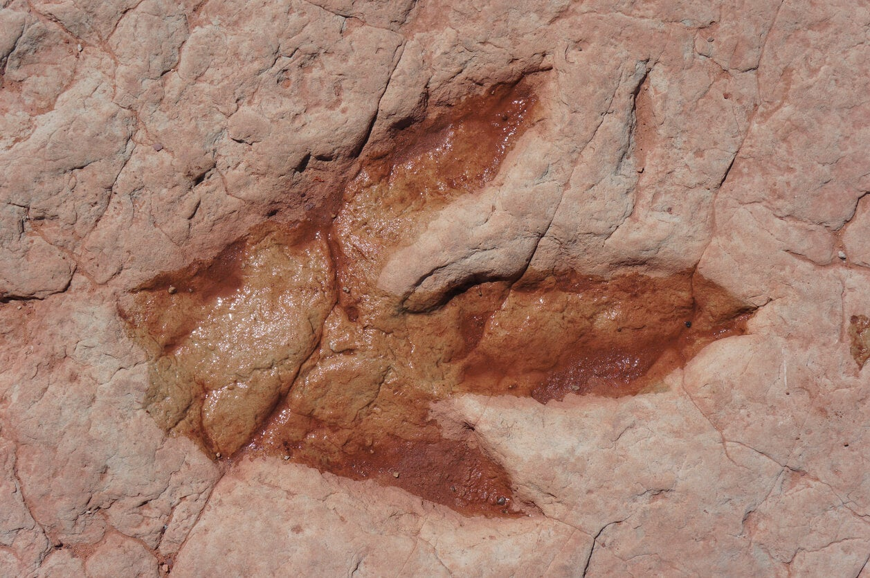 Huella de dinosaurio de uno de los lugares de España.