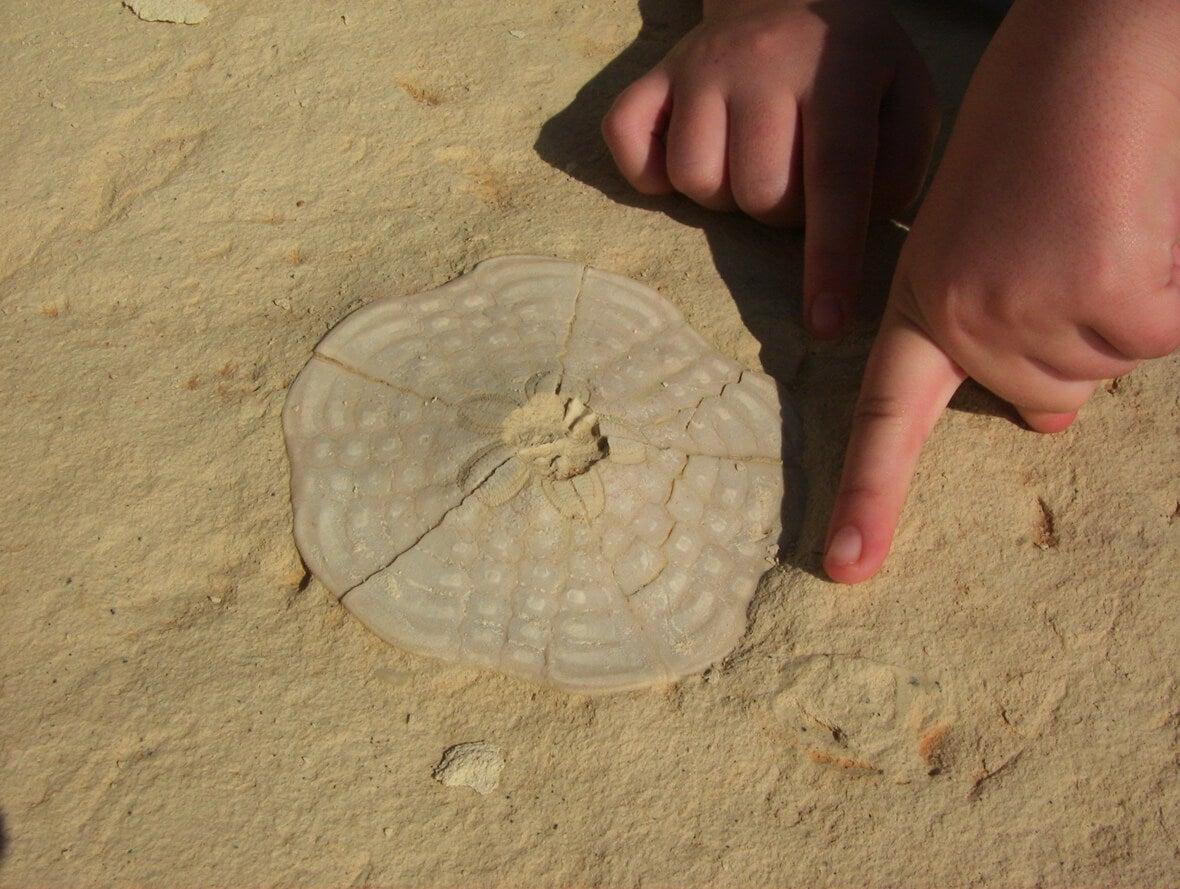 Enfant faisant des fossiles maison.