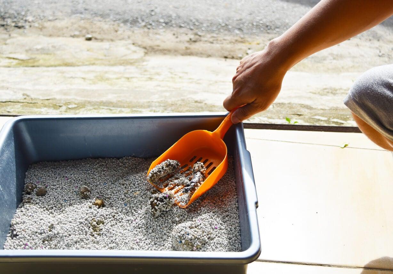 arena gato heces piedras pala limpieza riesgo toxoplasmosis