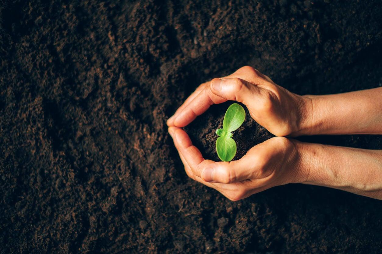 concepto conservacion cuidado vida brote arbol manos padres