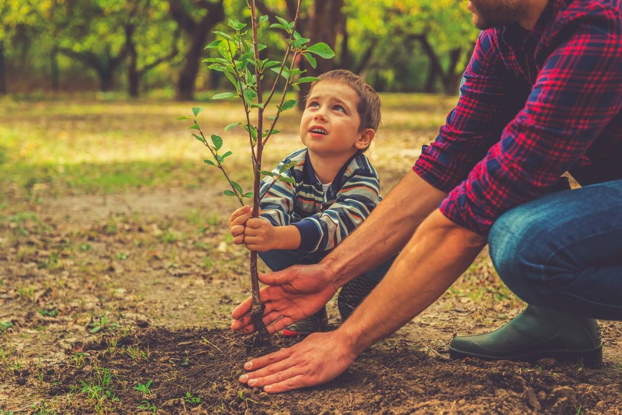nino pequeno y padre plantan arbol en tierra bosque
