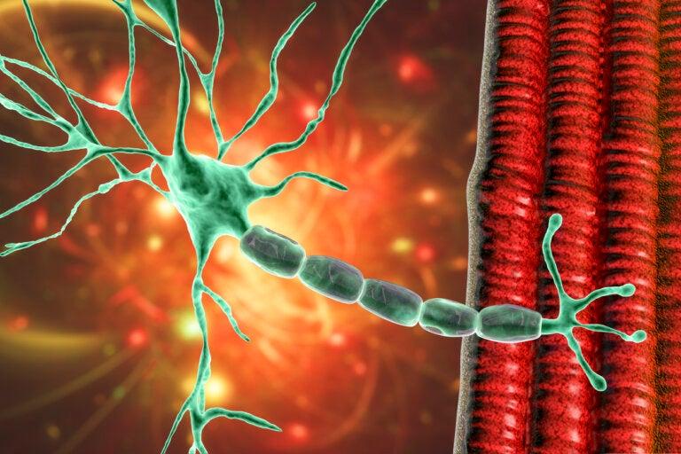 La mielitis flácida aguda en niños