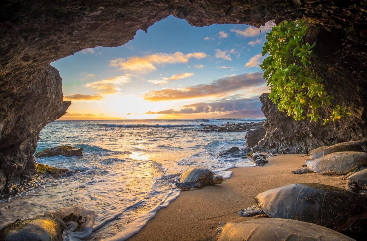 playa maui isla hawai mar piedras tortuga marina
